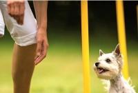 Wakeboard i wybieg dla psów - nowe atrakcje wokół Jeziora Winiary