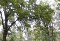 Ruszyła rewitalizacja Parku Trzech Kultur w Gnieźnie