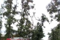 Wypadek w Szczytnikach Czerniejewskich! Sprawca uciekł z miejsca zdarzenia