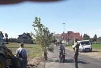 Drogowcy wycięli drzewo z asfaltu