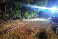 Jedna osoba poszkodowana w wyniku kolizji z dzikiem