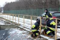 Dwa psy uwięzione na zamarzniętym stawie! Pomogli im strażacy