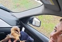 Policjanci drogówki uratowali sowę