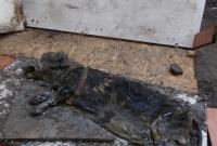 Martwy pies w budzie przy ul. Dalkoskiej! Dlaczego nikt się nim nie zainteresował?