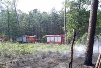 Pożar lasu w Pawłowie