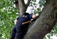 Strażacy z Trzemeszna uratowali kota, który utknął w drzewie