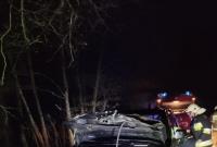 Jeleń zginął w zderzeniu z samochodem