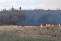 Duży pożar trzcin na Kustodii