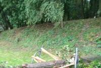 Drzewo przewróciło się na ławkę i zabiło dwie osoby!