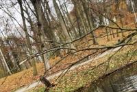 Piękna kaczka mandarynka w gnieźnieńskim Parku Miejskim
