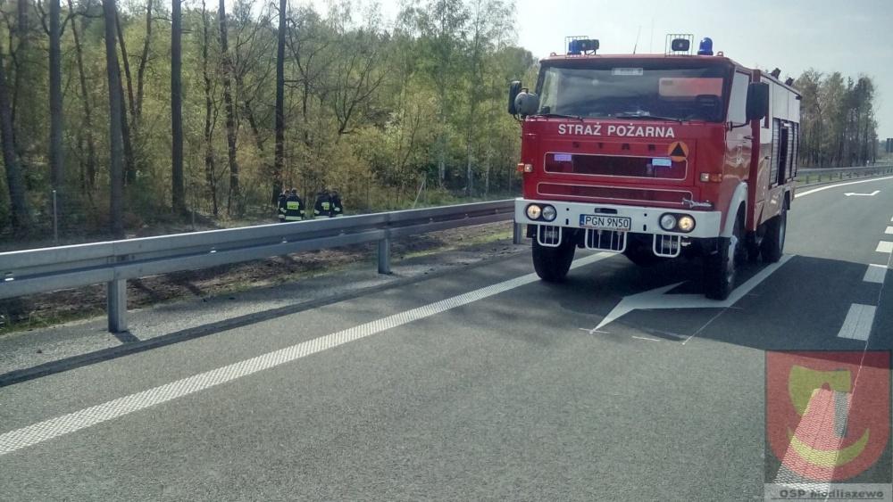 Sarna utknęła w ogrodzeniu trasy S5. Na pomoc przybyli strażacy