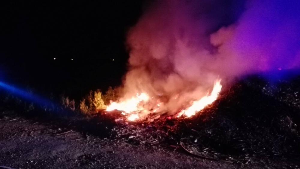 Pożar auta po pogoni za dzikami i łabędzie uwięzione na Placu Św. Wojciecha