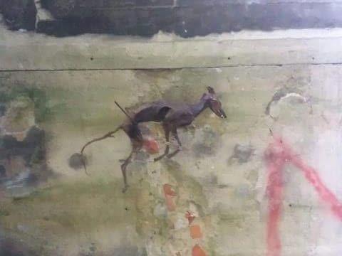 Martwy pies powieszony na ścianie