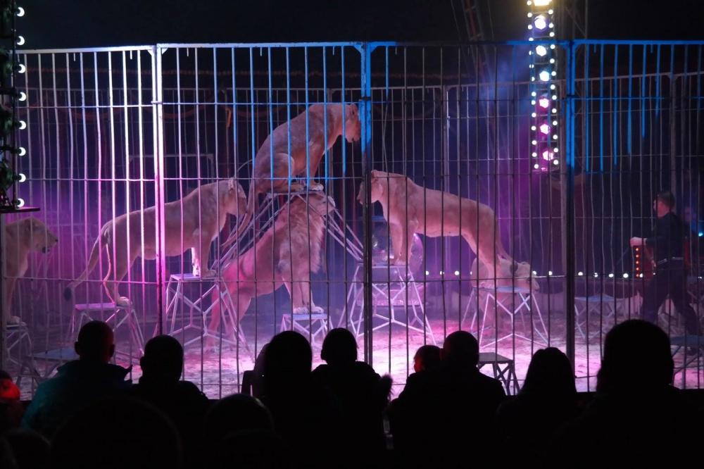 Cyrk Arena z jubileuszowym programem w Gnieźnie!