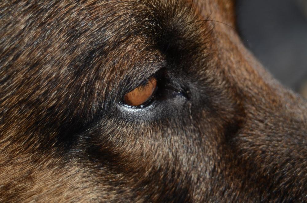 Masz psa lub napotkałeś na swojej drodze agresywnego czworonoga? Policjanci podpowiadają o czym powinieneś wiedzieć