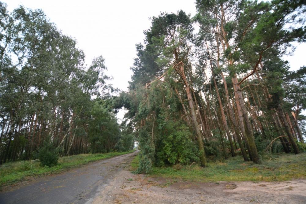 Stan klęski w lasach! Zakaz wstępu na terenie 5 leśnictw