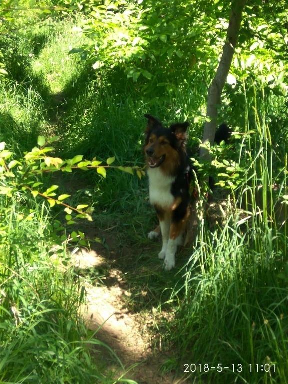 Ustalono właściciela psa przywiązanego do drzewa