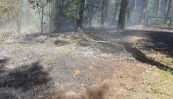 W trakcie ćwiczeń strażacy zauważyli pożar lasu!
