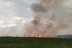 Zapach spalenizny i pożar zboża na pniu