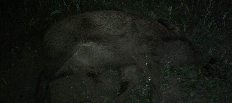 Zderzenie z dzikiem! 3 osoby ranne