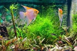 Akwarium jako dekoracja wnętrza