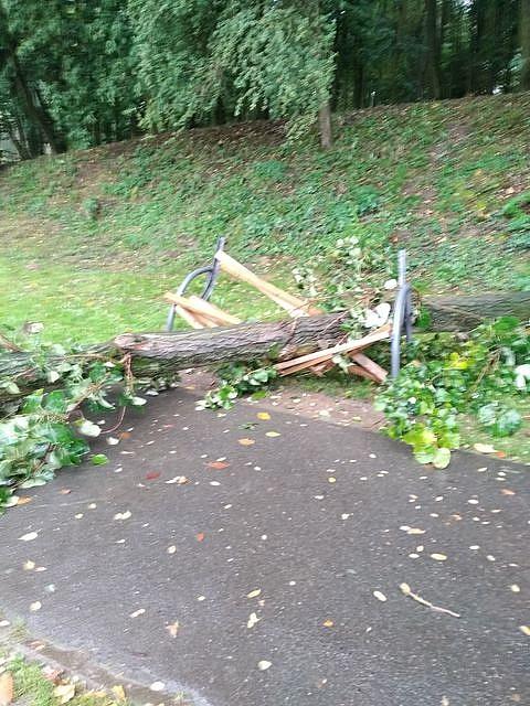 Drzewo przewróciło się na ławkę i zabiło dwie osoby! Dlaczego Urząd Miasta nie zareagował po zgłoszeniu?