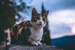 Idzie zima! Dokarmiajmy wolno żyjące koty!