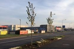 Nowe drzewa w mieście
