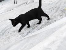 Budki dla wolno żyjących kotów