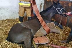 Gnieźnieńscy strażacy pomagali ratować konia