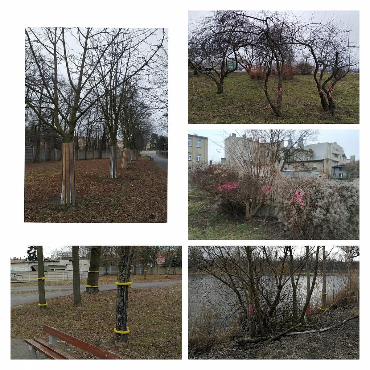 Ruszyła rewitalizacja Wenecji! Wyciętych zostanie prawie 700 drzew! Dlaczego?