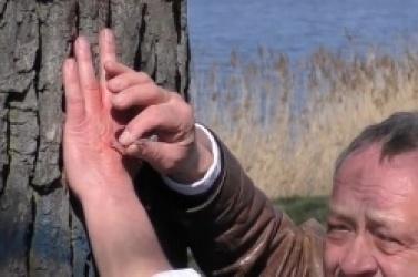 Pan Boguś przybił się do drzewa na Weneji! W ten sposób protestuje przeciwko wycince