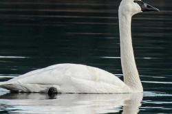 Ostrzeżenie przed kontaktem z dzikim ptactwem