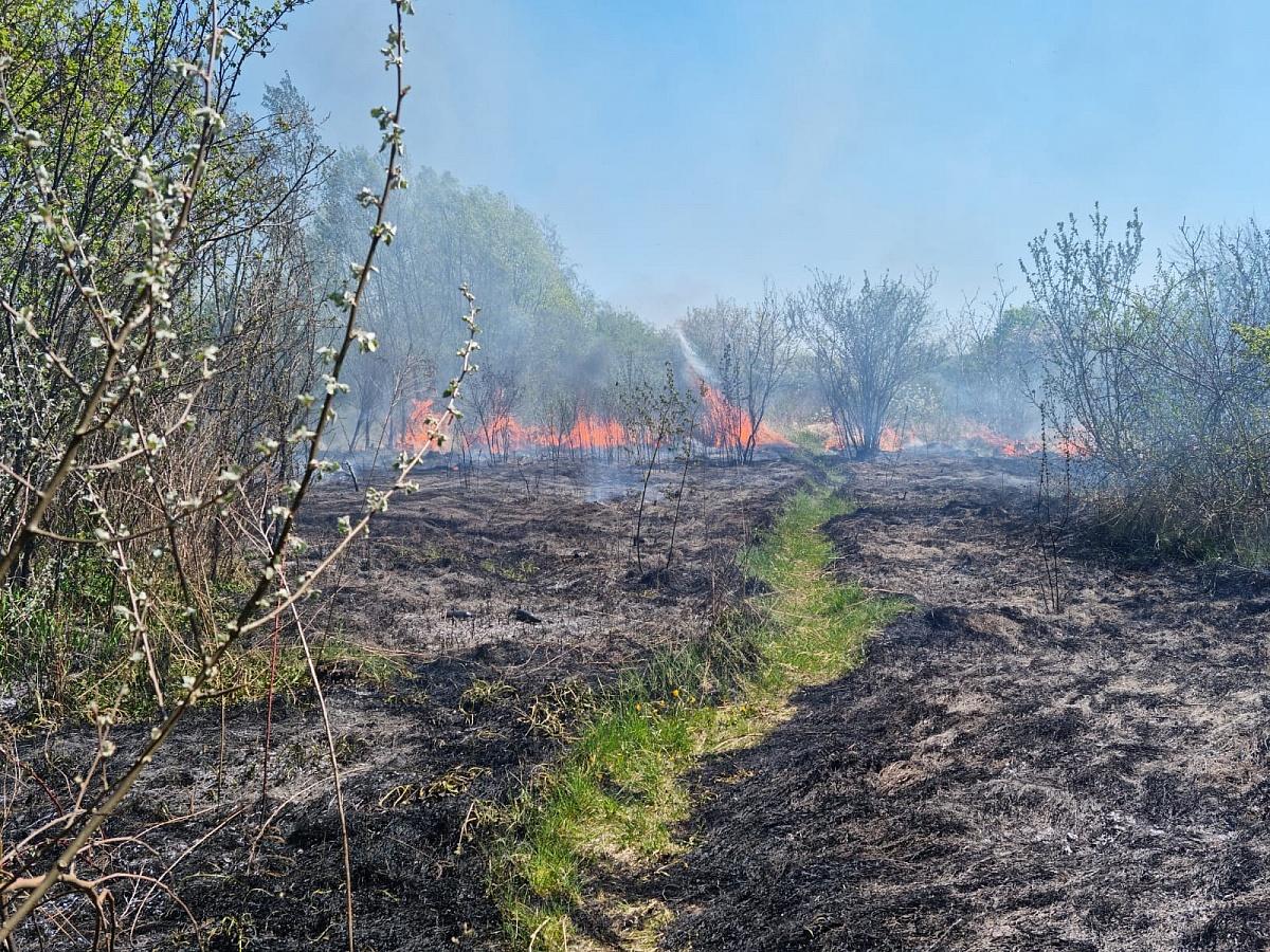 Pożar trawy przy ul. Konopnickiej