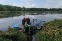 Podkaszanie rdestnicy na Jeziorze Winiary