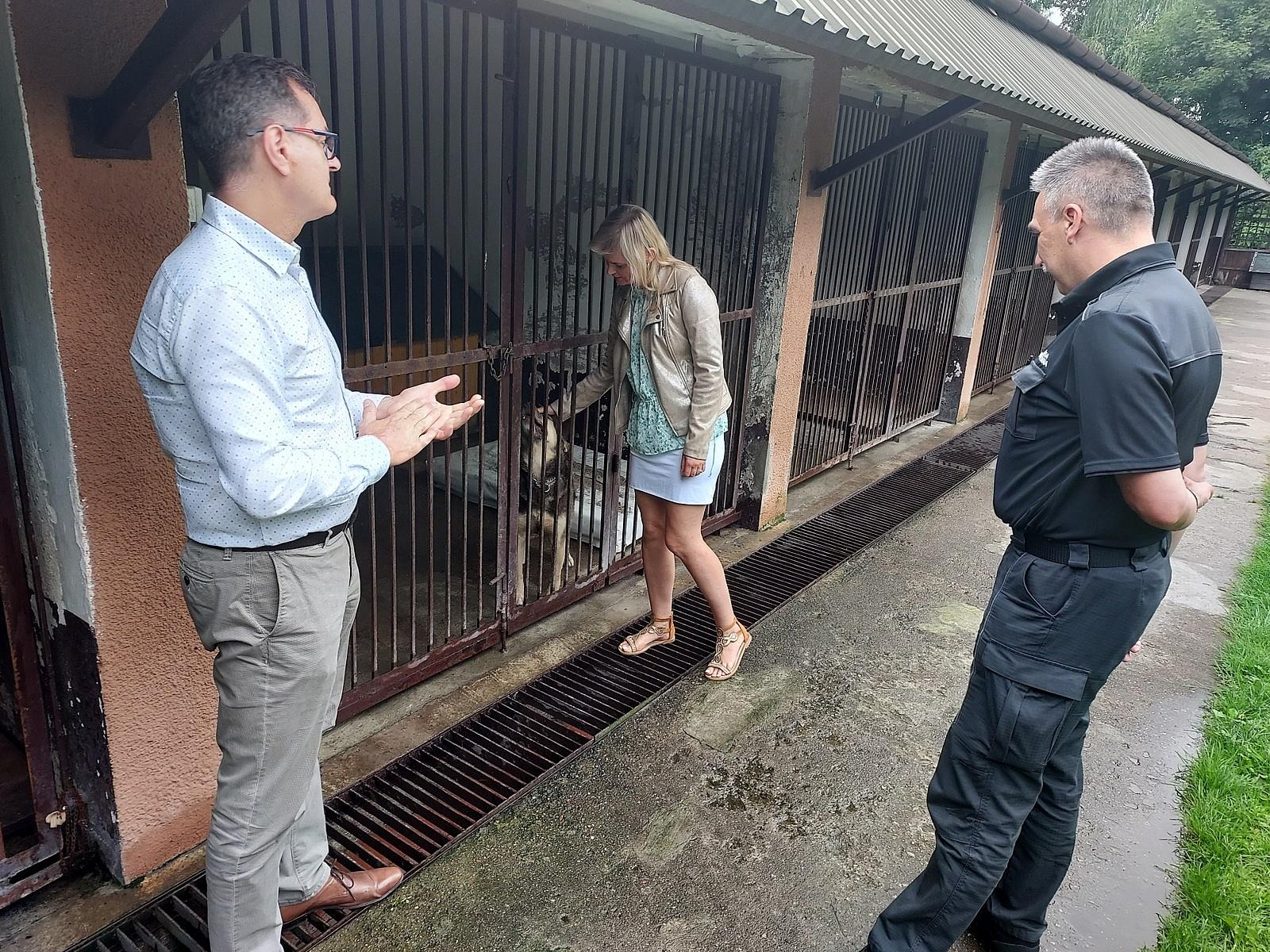 Więźniowie będą naprawiać psie budy z gnieźnieńskiego schroniska