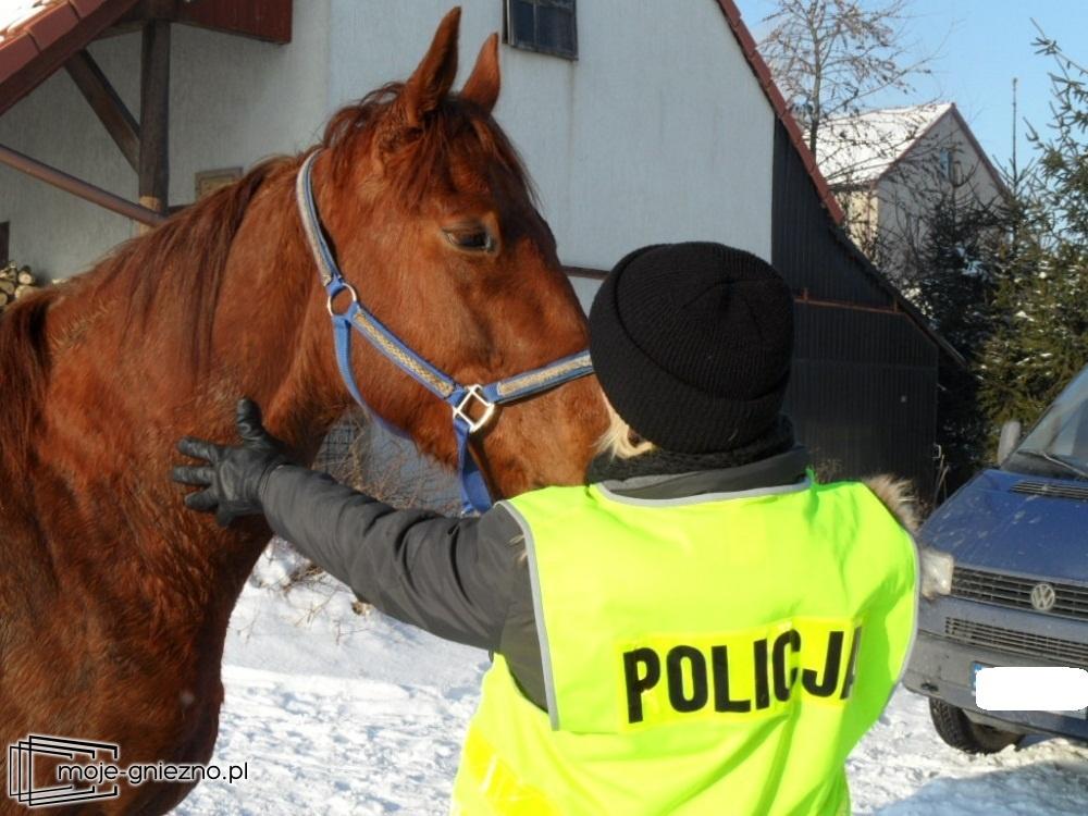 Koń bez jeźdźca kłusował przez miasto