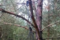 Truchło na drzewie w Wymysłowie! Czy służyło do szkolenia psów?