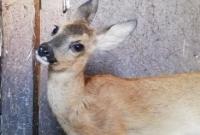 Potrzebna pomoc dla Ośrodka Leczenia i Rehabilitacji Dzikich Zwierząt