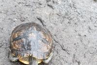 Martwy żółw wyłowiony z Jeziora Winiary