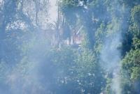 Pożar trzcin przy cmentarzu! Spłonęło wiele gniazd