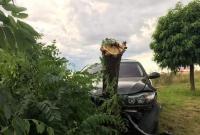 BMW wypadło z drogi i zakończyło jazdę na drzewie