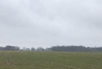 Wiosenny zlot żurawi w Zakrzewie