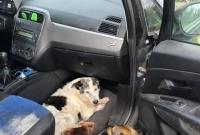 Poszukiwany właściciel psa!