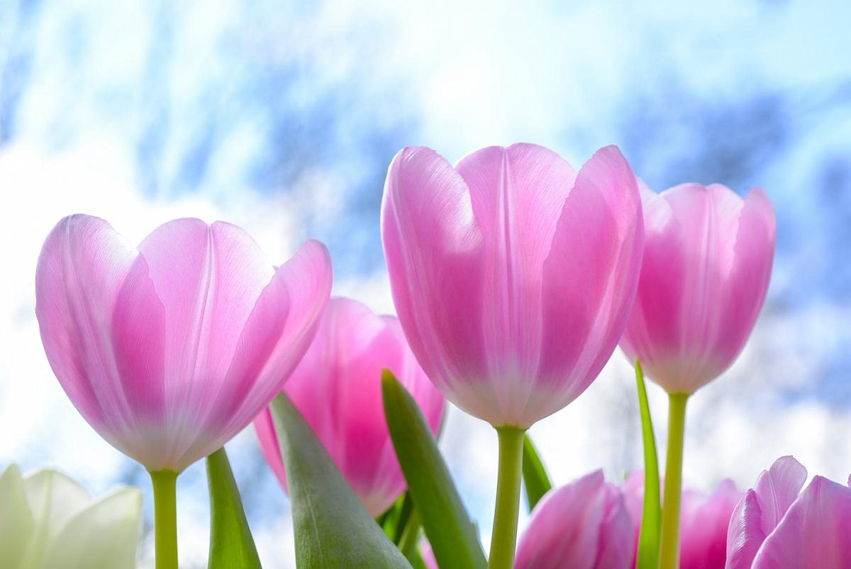 Podaruj ukochanej osobie cudowny bukiet kwiatów