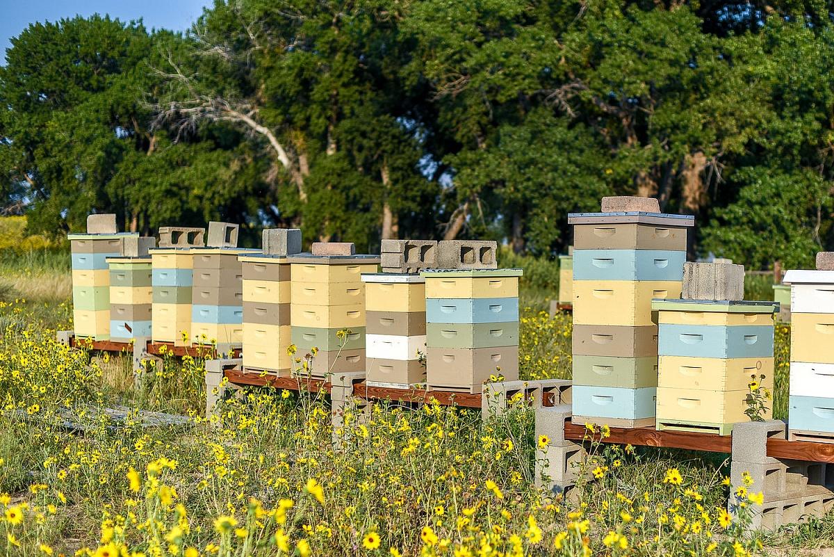 2 000 zł nagrody za wskazanie sprawcy wytrucia pasieki pszczół w Sroczynie