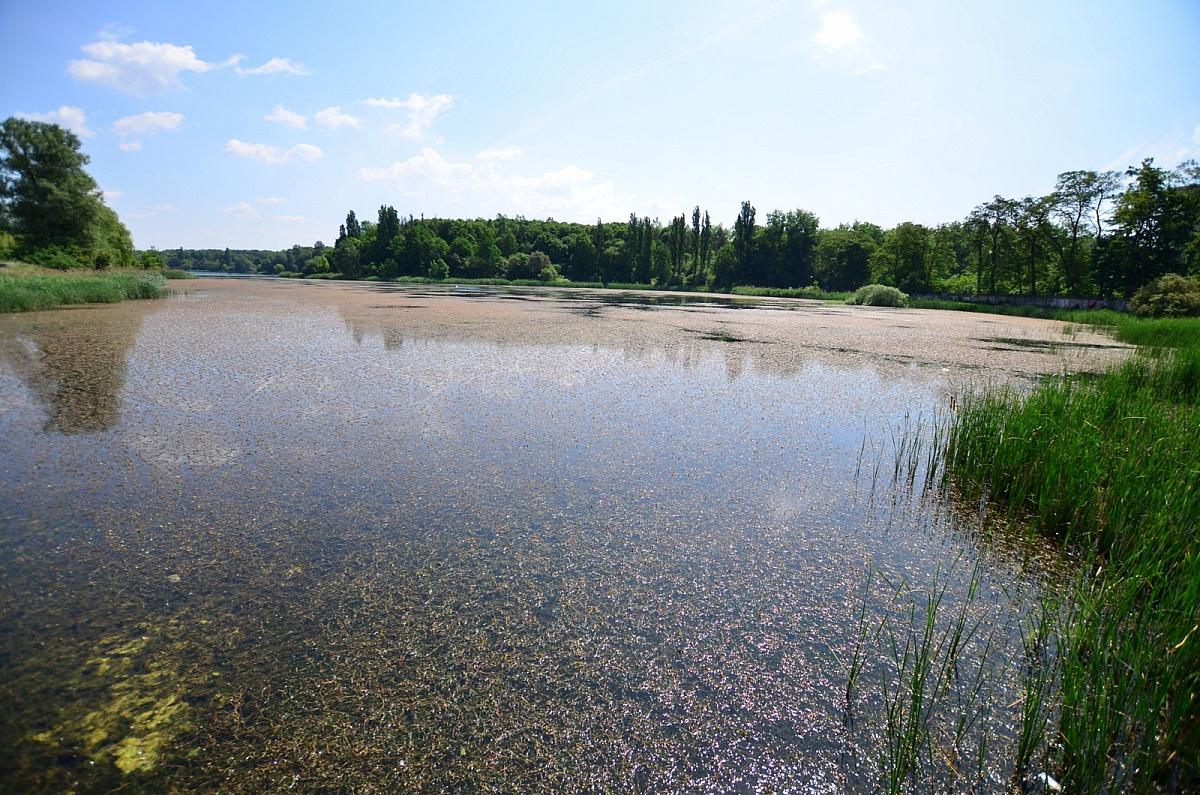 W tym roku miasto nie będzie usuwało rdestnicy z Jeziora Winiary
