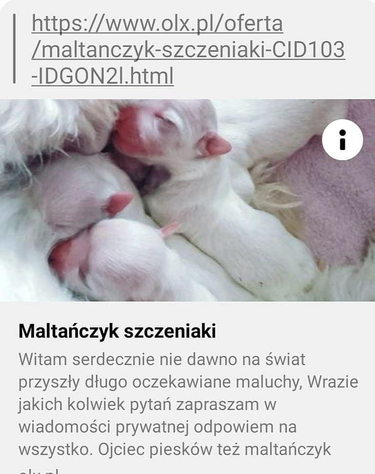 Stowarzyszenie Gnieźnianie Razem dla Zwierząt szuka osób oszukanych przez pseudohodowcę maltańczyków