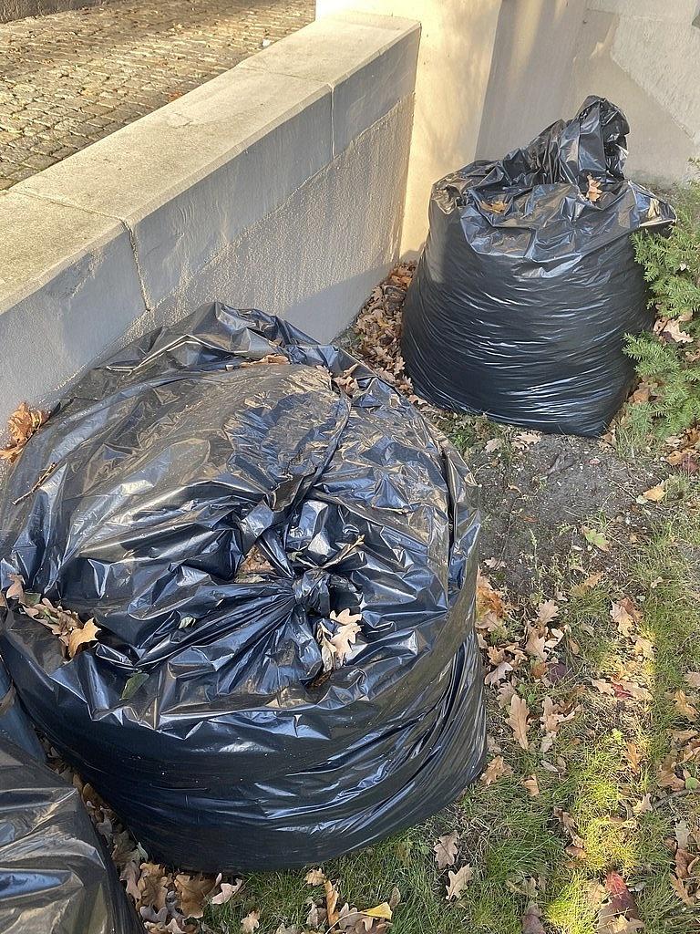 Zbiórka liści zebranych z chodników