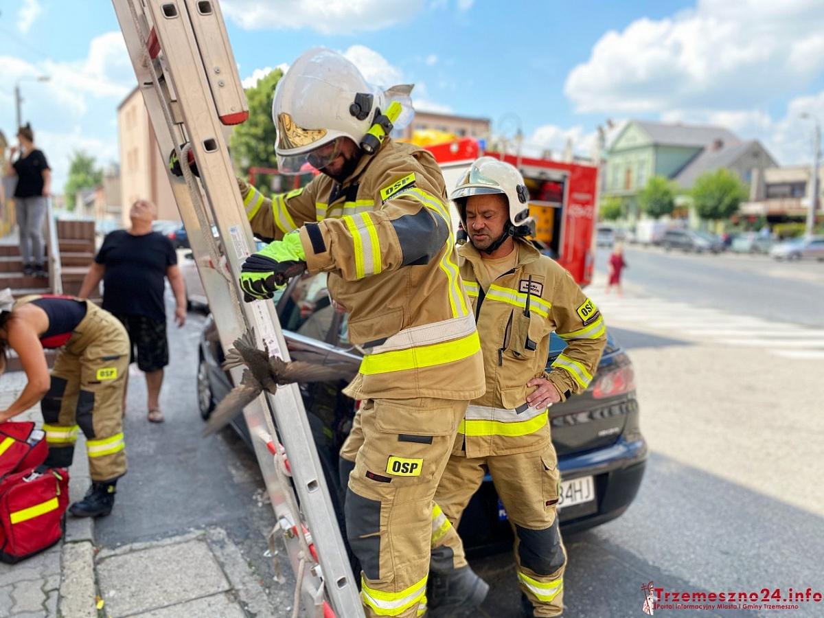 Strażacy uratowali ptaka, który zaplątał się w odgromnik
